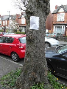 Tree - Oxford Road - 2